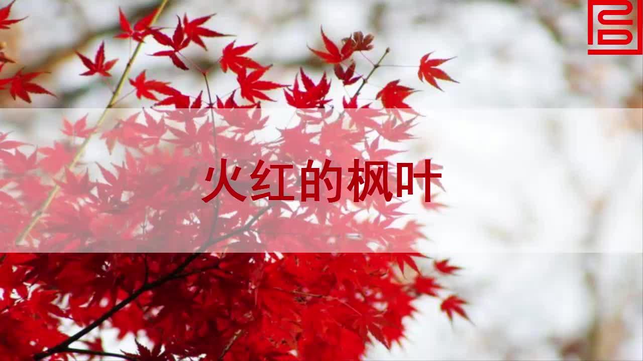 【北师大版】语文二年级上:第1单元第2课《火红的枫叶》课文朗读